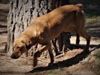 The Madison Oglethorpe Animal Shelter is a high intake