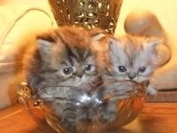 These darling little golden-eyed cuties are healthy,