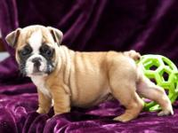 We have two amazing puppies ready to complete your