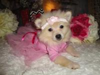 I have 2 female Pomeranian Puppies. They are super