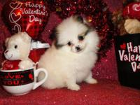 I have 5 cute Pomeranian young puppies. 2 Female and 3