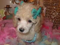 I have five Toy Poodle puppies. 3 lady and 2 male. All