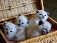 I have five really cute kittens Well socialized with