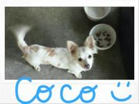 Coco is looking for a new loving home!! He's 5 mos old.