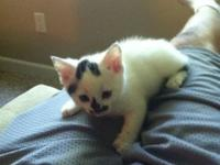 I have 3 male kittens left! 8 weeks old. Both very