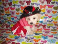 I have 6 available maltipoo puppies, 3 male and 3