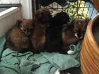 I have 6 puppies that are ready October 13, Tuesday. I