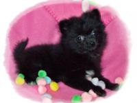 Meet Clove. She is a black AKC (eligible) female