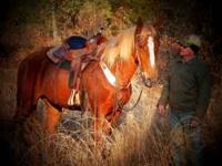 If you are looking for a truly nice Tennessee Walker on