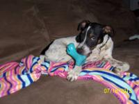 Monkey is super sweet male 4 month old blue tick mix ,