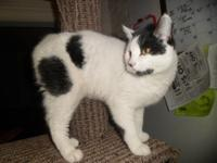 Here is Domino he needs to find his home. He is a sweet