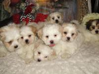 I have 7 puppies, they are all friendly and love to