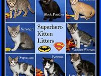 Superhero Kitten Litters's story These adorable eight