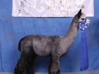 What a DEAL! Twelve ARI registered alpacas for the