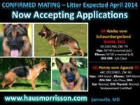 HAUS MORRISSON GERMAN SHEPHERDS is honored to announce