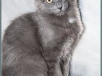SUSETTE's story $97.50 FEE INCLUDES: neutering/spaying,