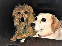 Susie's story Susie and Scruffy are a bonded pair. They