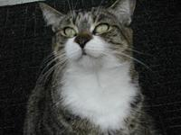 Susie's story Susie is a cute little female kitty about