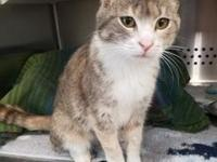 Suzie's story Suzie is approx. 4 year old female spayed