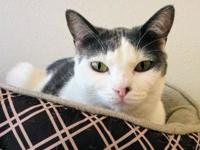 Suzy's story Suzy is a domestic shorthair who was born