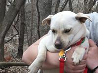 Suzy's story Suzy is a darling 20 pound mixed breed dog