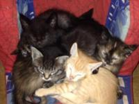 We have 6 kittens looking for homes, 3 male 3 female.