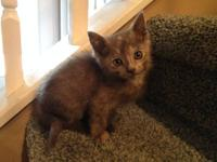 We have five cute well socialized kittens that need