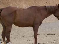For sale: 15 year old Arabian at $800. Great for kids