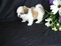 1 very sweet 9 week old malti poo !!!! He is just
