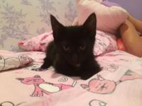 Smokie is a really friendly and sweet 8 week old female