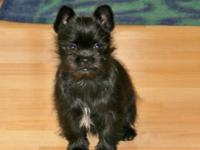 We have a sweet little puppy that needs a new home. She