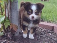 Sweet as she can be. Ten weeks old with hazel eyes.