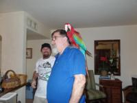 Green-wing Macaw parrots extremely tame very easy to
