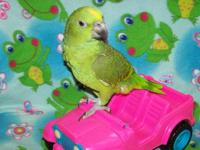I have a beautiful female yellow naped amazon baby that