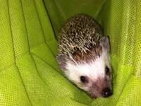 I have a Hedgehog named Willow. I love her dearly, but