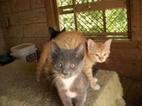 3 sweet little kittens trying to find a loving house.