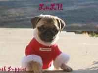 Posh Puppies is offering sweet adorable little pug