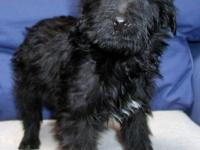 Priced to Sell . . This little girl is Sweet Pea. She's