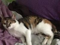 Name:Suger Age:2 Years Color:Calico Personality:Sweet