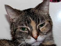Sweet Pea's story Sweet Pea is a torbie Domestic