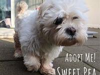 My story MEET SWEET PEA: Are you looking for a new pea