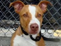 *This dog is located at Manhattan Animal Care and