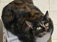 SWEET SPICE GIRL's story Sweet ten month old female