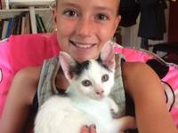 Angelina is a lively and sweet 4 month old kitten. She