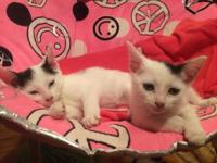 Angelina and Tiny Tim are two gentle and sweet 8 week