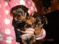 I have 2 ADORABLE, lovable, healthy Yorkie puppies . !