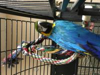 Sweetheart is an adult B&G Macaw. She is a sweet bird