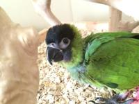 Have you ever met a nanday conure before? They are so