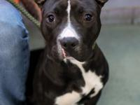 Name: Sweetheart Age: 1 year old Friendly with dogs:
