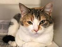 Sweetie's story This beautiful, friendly girl just
